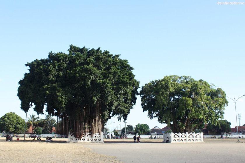 Pohon-Beringin-Kembar-di-Alun-alun-Selatan-dan-Perumpamaannya